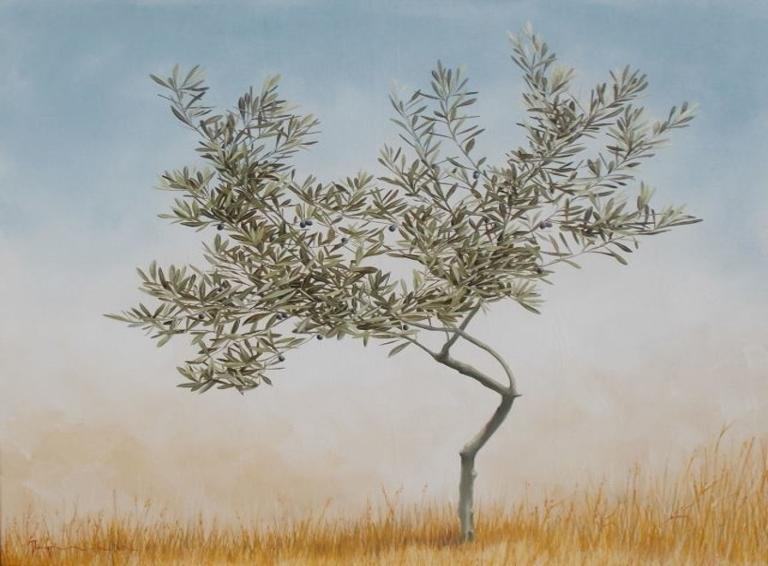 Olive oil tree